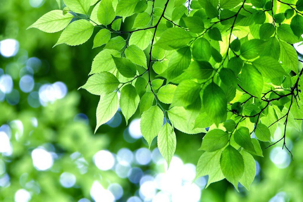 薫風緑樹をわたる好季節となりました。